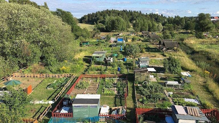 Hjulsta koloniträdgård