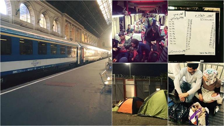 Collage, #flyktvägen. Foto: Firas Jonblat / Radio Sweden Arabic