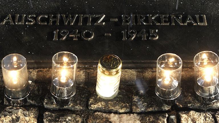 صورة أمام معسكر الإبادة في آوشفيتز-بيركناو في بولونيا. بعدسة آليك كيبليتش.
