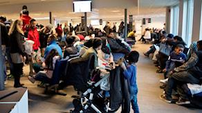 132 замужних, женатых ребенка попросили убежища в Швеции вместе со своими супругами.