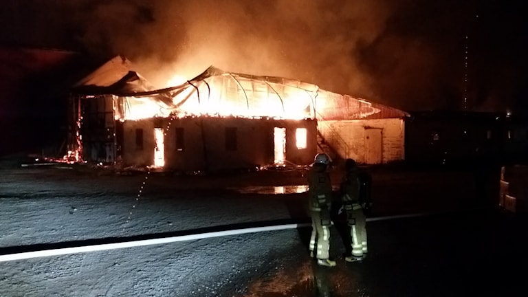 جانب من الحريق / صورة مصلحة الإنقاذ