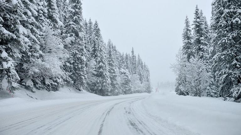 Vinterväglag i Dalarna
