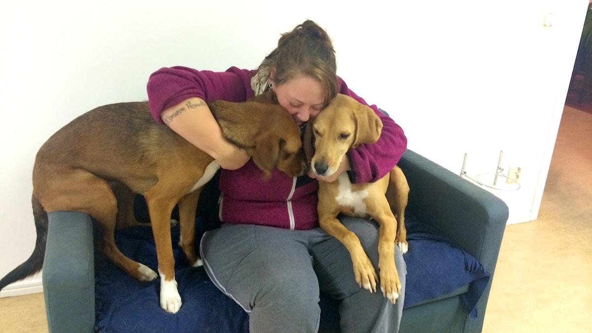 Nathalie Swahn omistaa koirapäiväkodin Gävlen Brynäsissä, istuu sohvalla kahden koiran kanssa.
