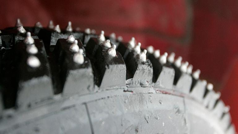 Däck med långa dubbar på en av tävlingsbilarna. Foto Bertil Ericson/TT.