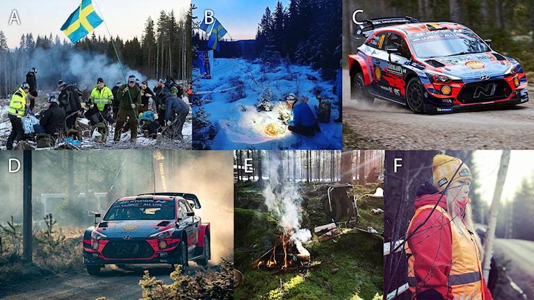 Fotomontage med årets nominerade bilder. Foto: Läsarbilder