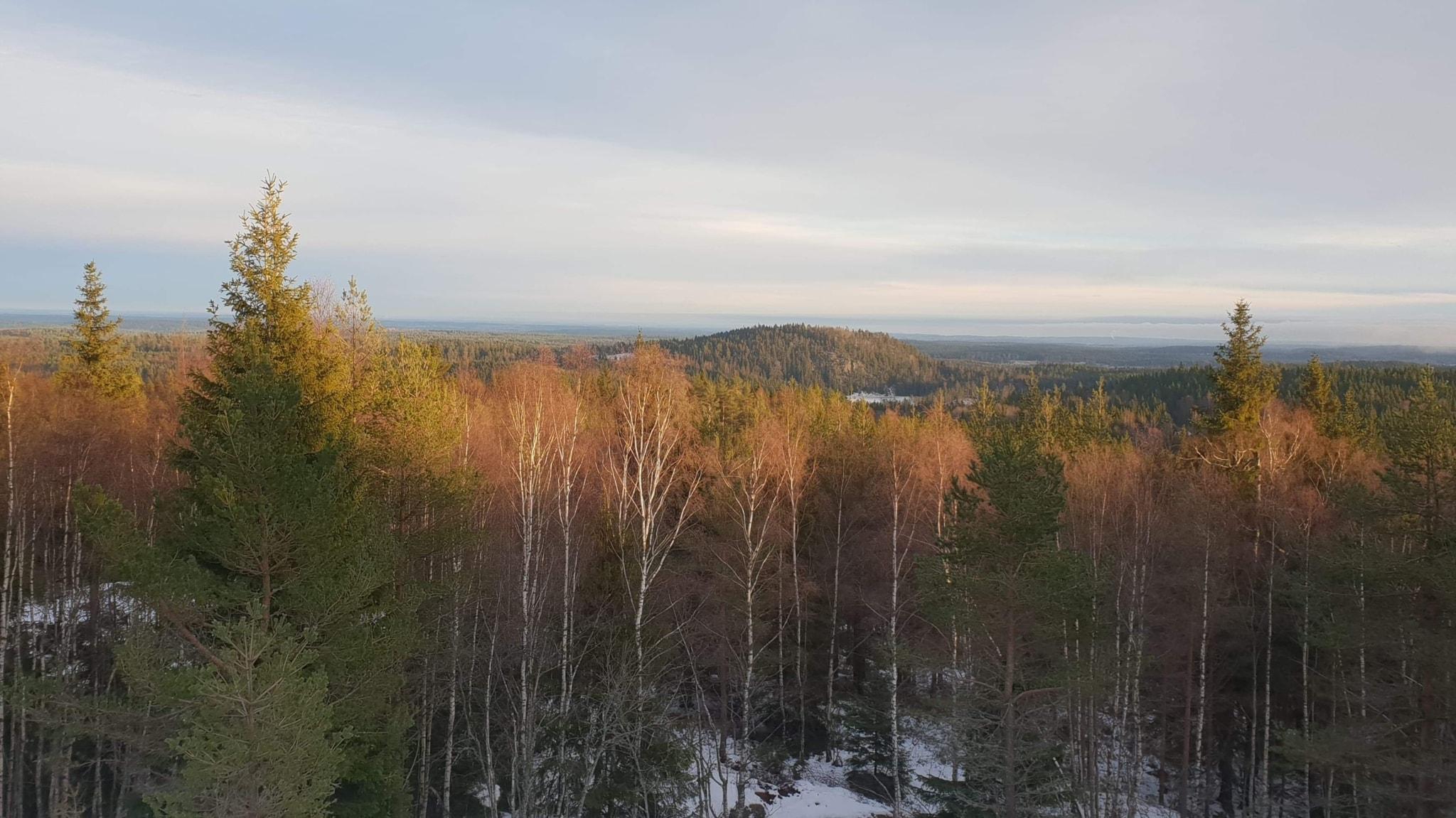 HYVÄÄ ALKANUTTA VUOTTA 2019!