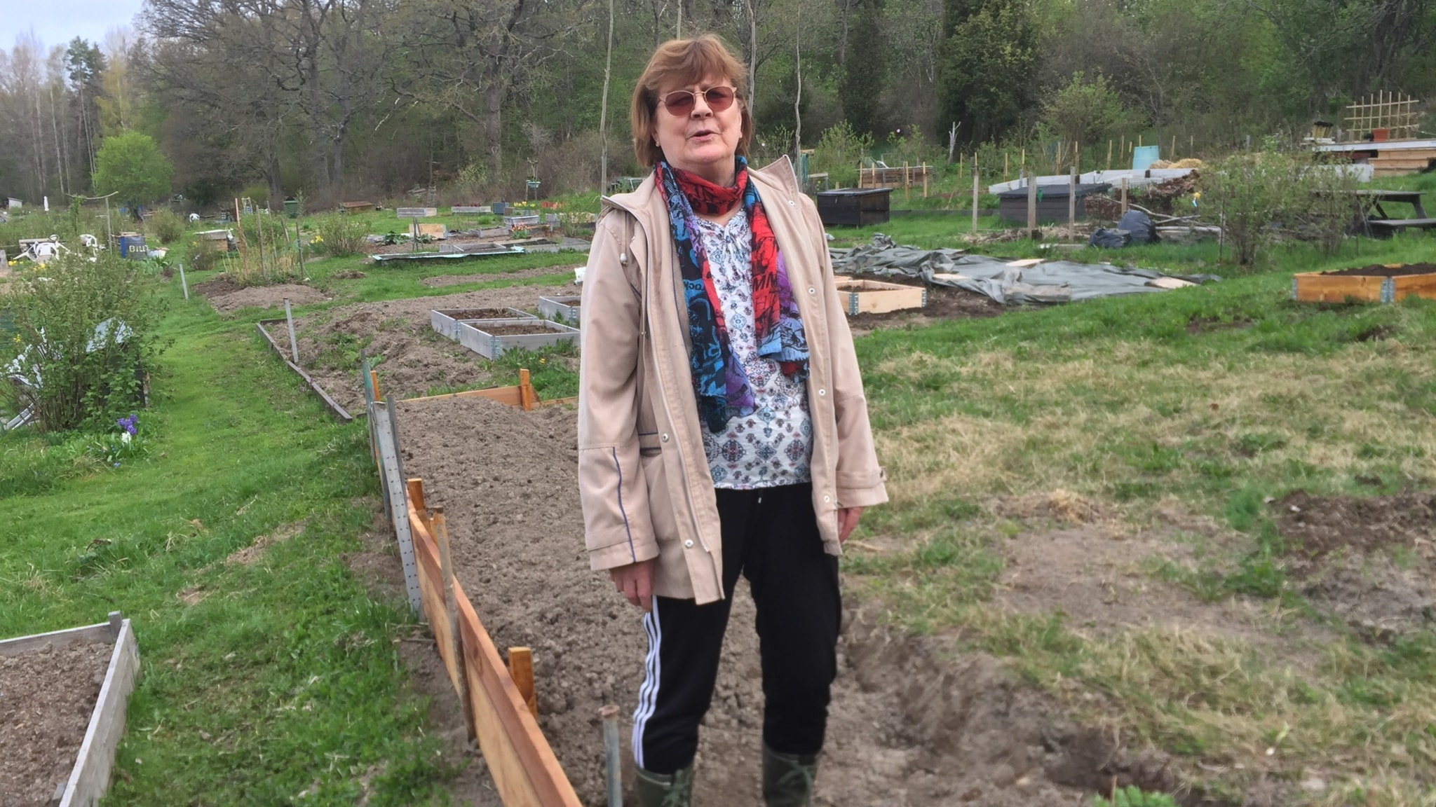Terttu Heikkinen on tuore puutarhapalstan hoitaja