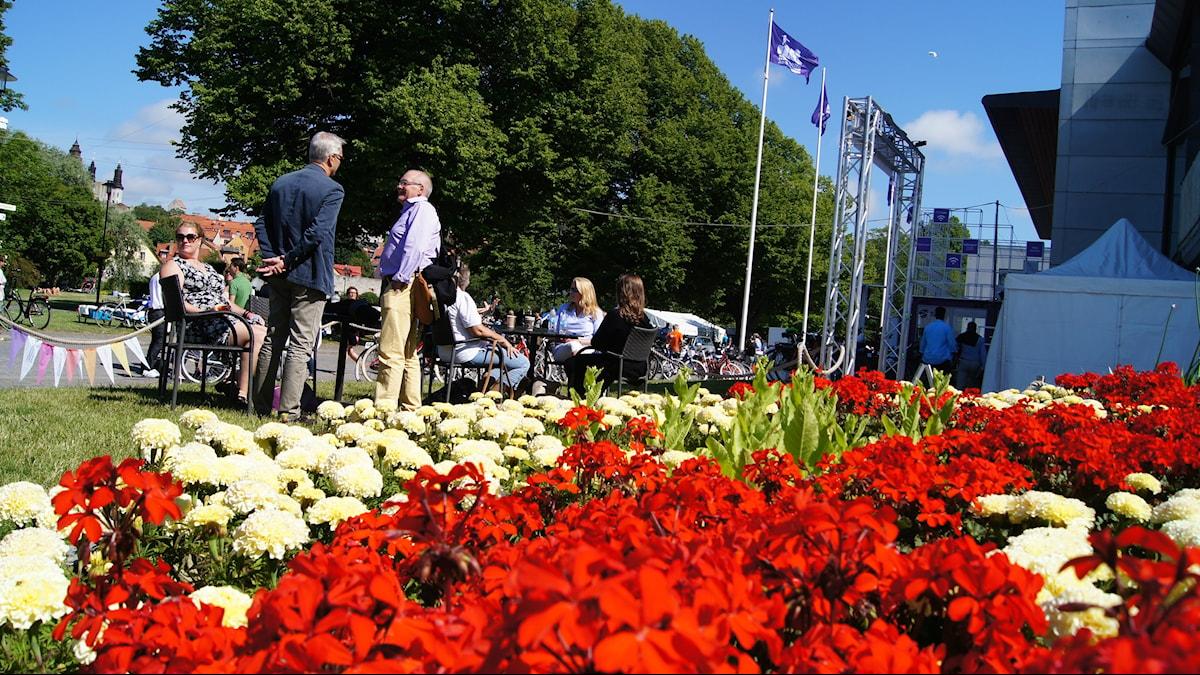 Kesäinen kuva Visbystä, kuvassa kukkia ja ihmisiä keskustelemassa. Foto: Pekka Kenttälä/Sveriges Radio Sisuradio