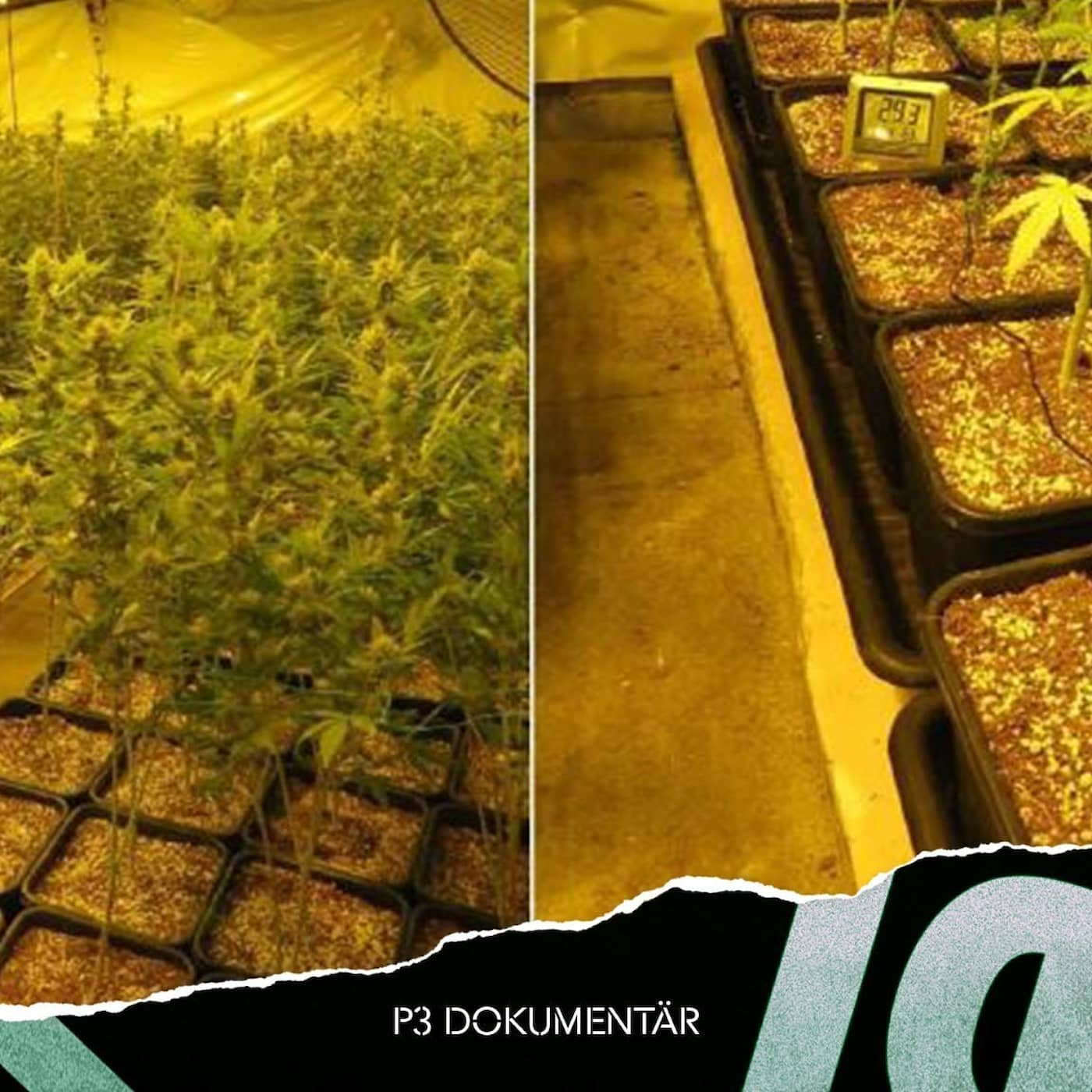 *NY* Cannabisfabriken