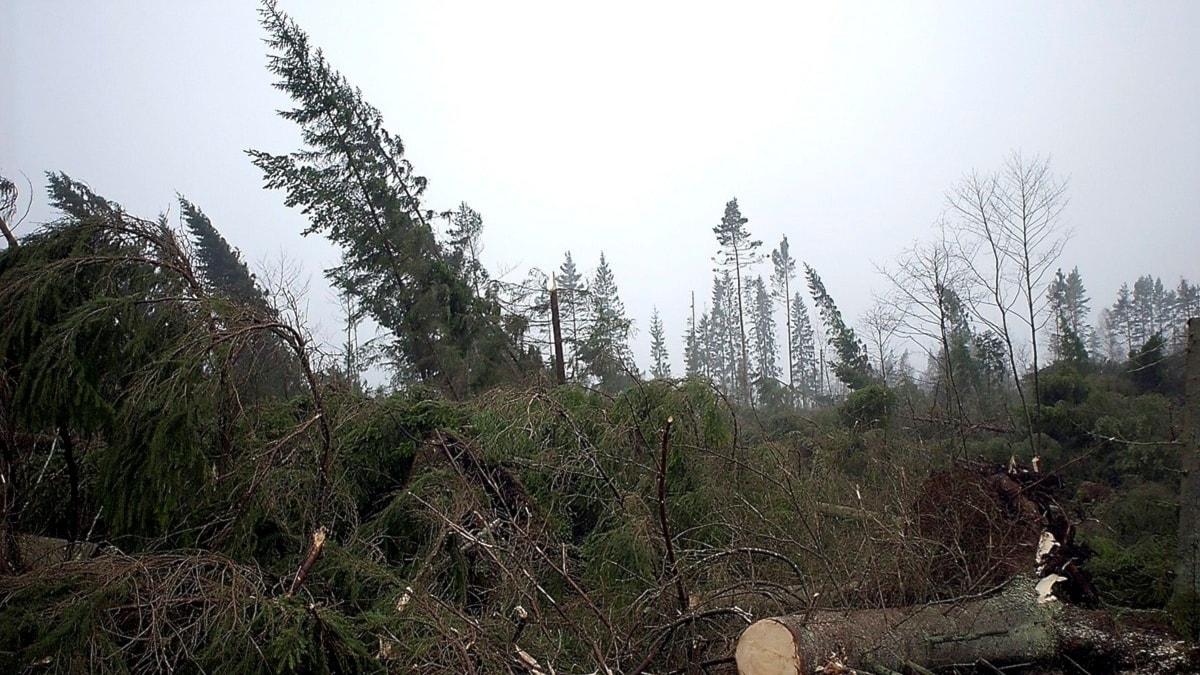 Förstörd skog. Foto: Ola Andersson / Scanpix.