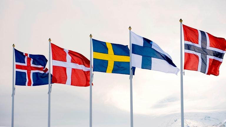 De nordiska ländernas flaggor. Foto: SVT Bild.