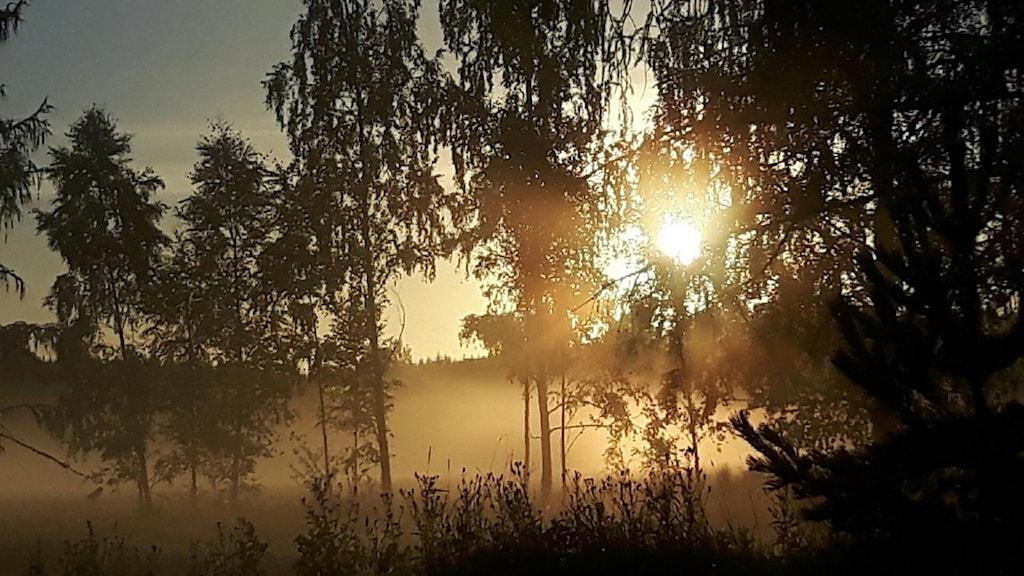 Soldis i lännaskogen utanför strängnäs i Södermanland. Från tidningsbudet.