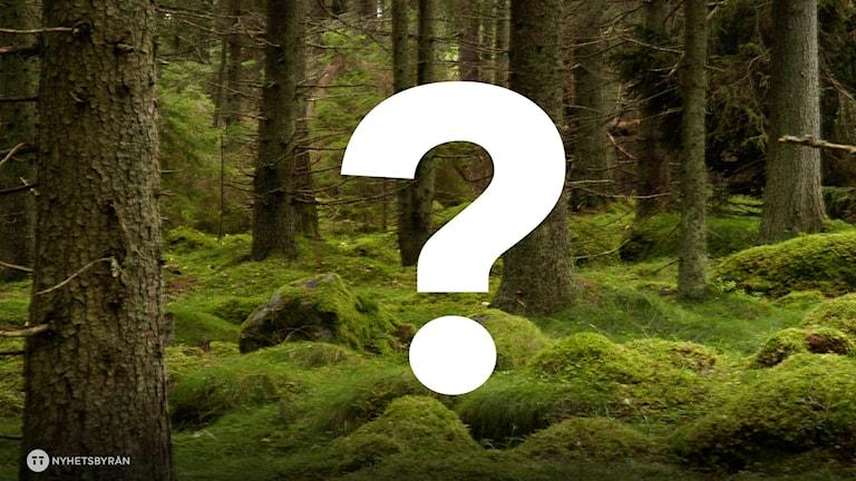 Tio saker som finns i skogen gömmer sig i ljuden - vilka?