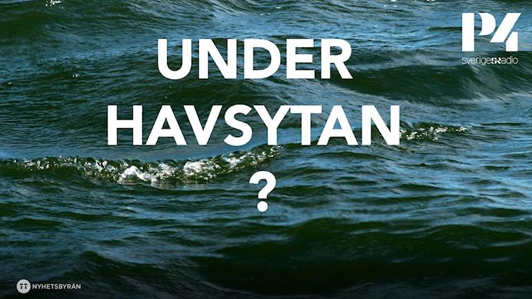Vilka 10 djur eller organismer i haven finns i ljuden?