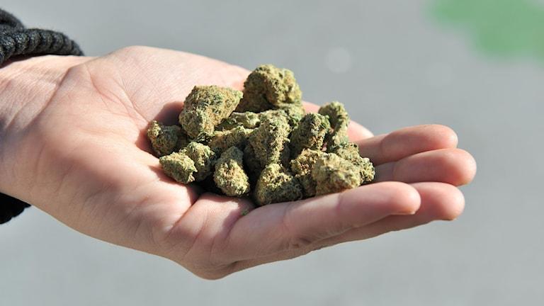 Cannabis nu lagligt i Kanada