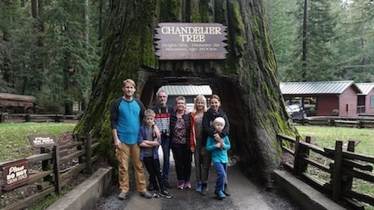 Familjen Svemark på besök vid ett av alla träd man kan köra igenom i Kalifornien.