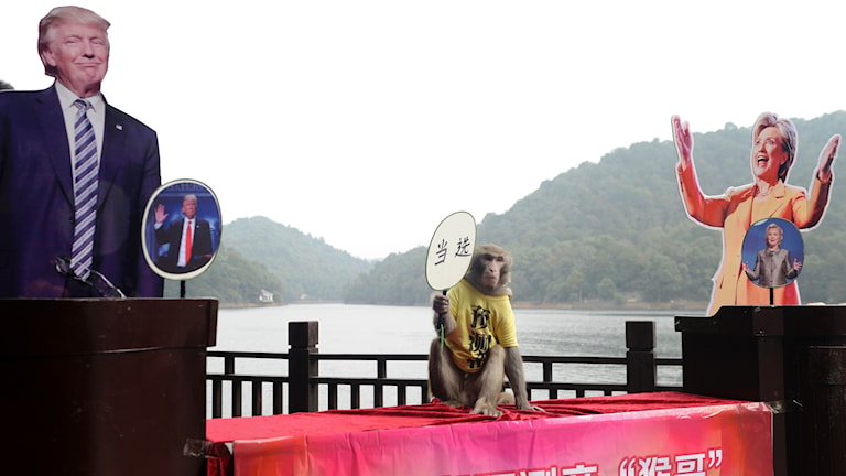 Trump och Clinton som pappersdockor i Kina, här tillsammans med en apa.