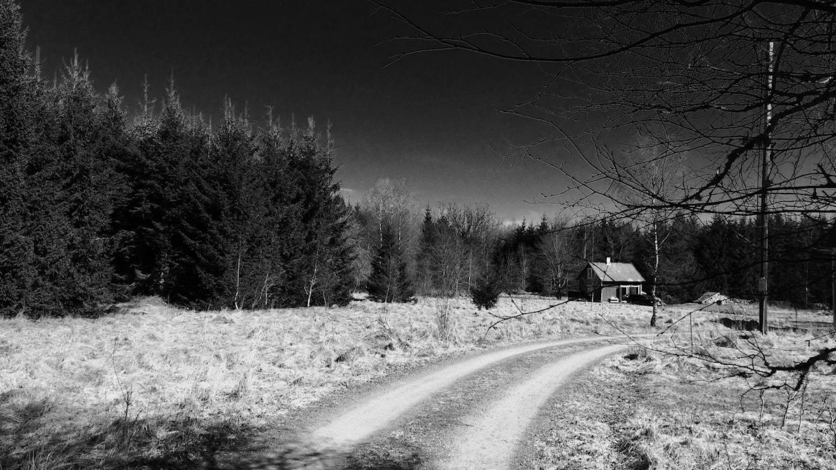Ett hus vid en landsväg och skog. Foto: Sveriges Radio