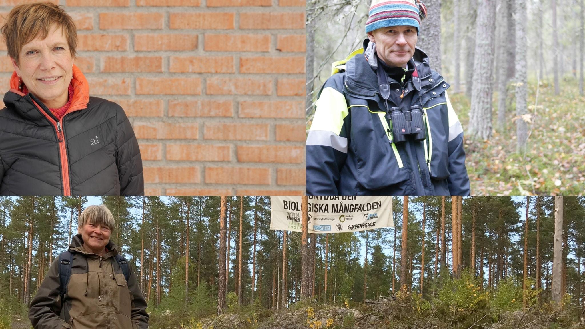 Kampen om skogen 4: En konflikt som aldrig tar slut