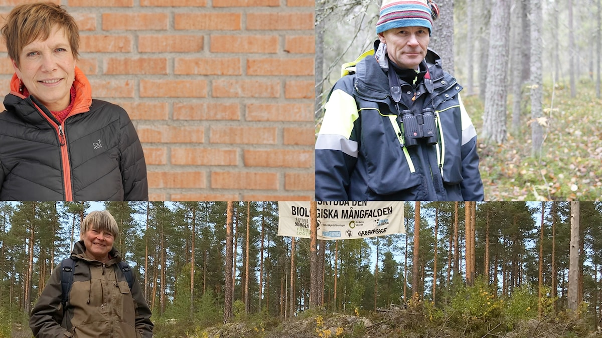 Karin Lindahl Beland, Herman Sundqvist, Margareta Wikström