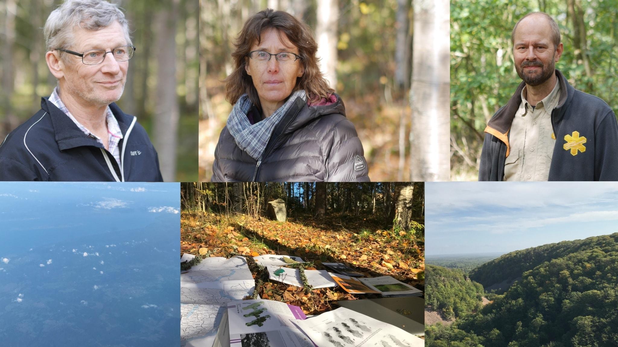 Kampen om skogen 1: Om konflikten mellan barr och löv.