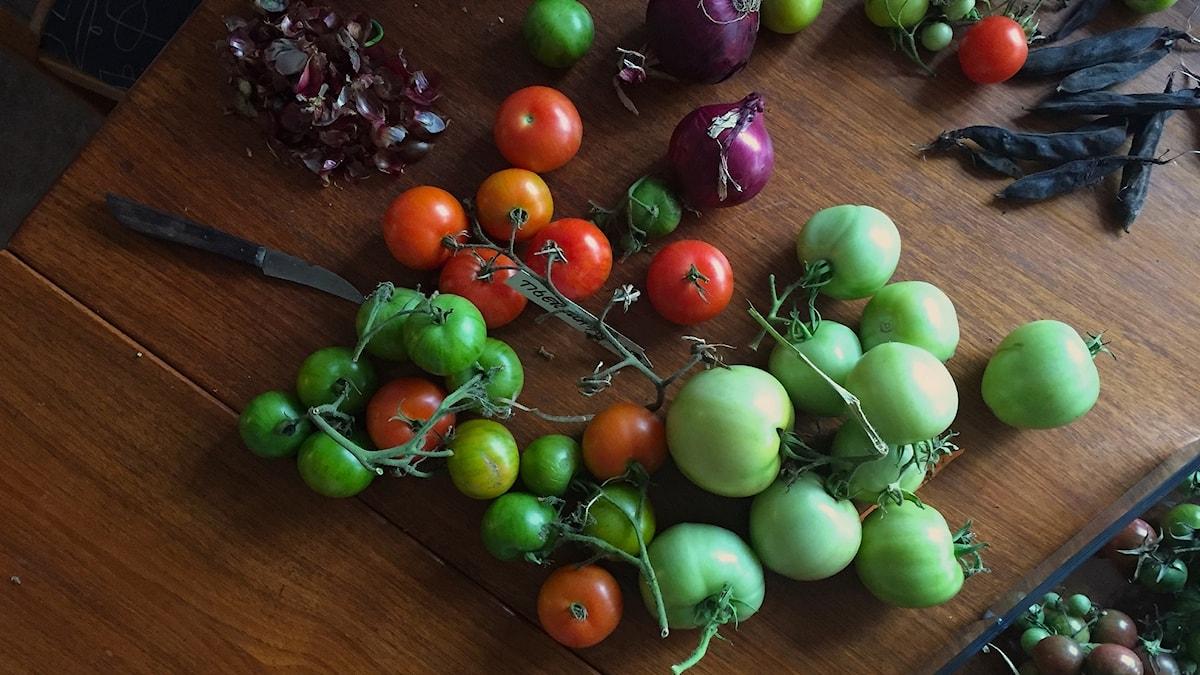 Tomater på bord.