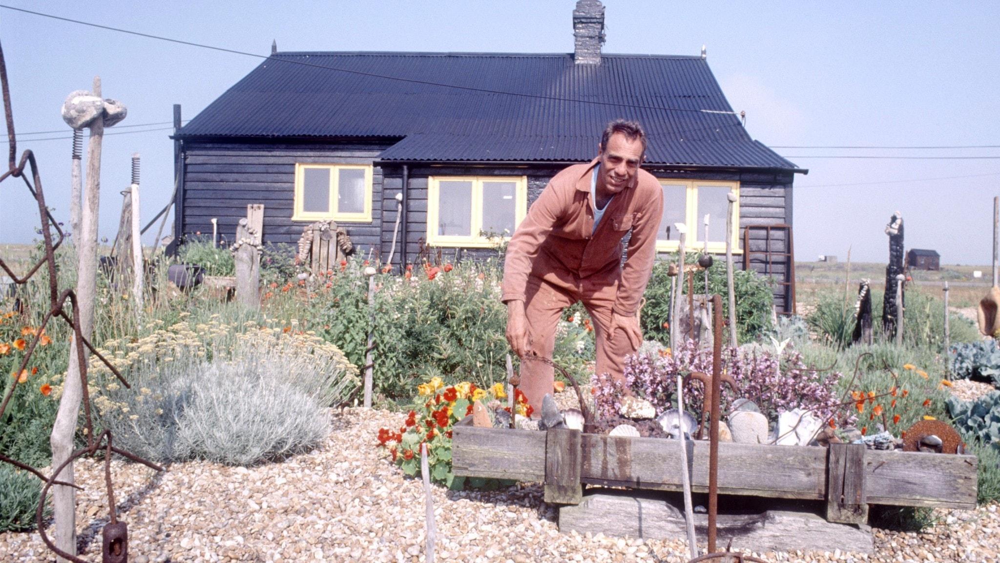Filmregissören, författaren och konstnären Derek Jarman i sin trägård vid Prospect Cottage på Dungeness i England.