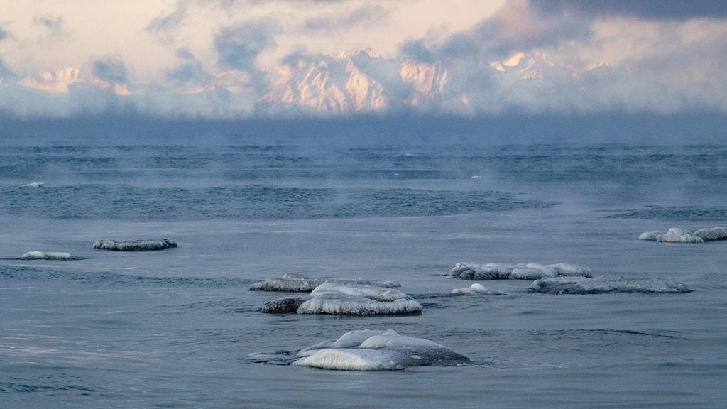 Arktis och Svalbard hör till de områden i världen som drabbats hårdast av klimatförändringarna