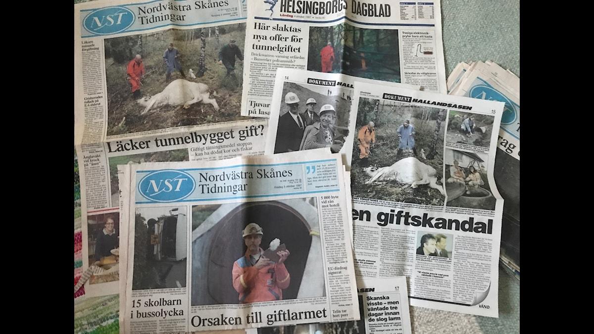 Korna hamnade mitt i mediestormens öga när skandalen kring tunnelbygget växte