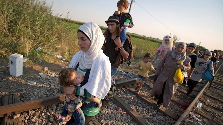 Folk på flykt. Här på järnvägen på väg från Serbien till Ungern. Foto: Darko Bandic/TT.