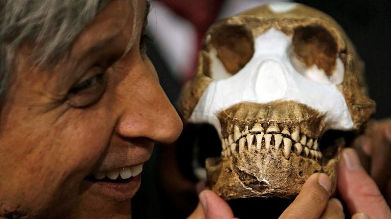 Professor Adam Habib håller en rekonstruktion av Homo naledi. Foto: AP Photo/Themba Hadebe/TT.