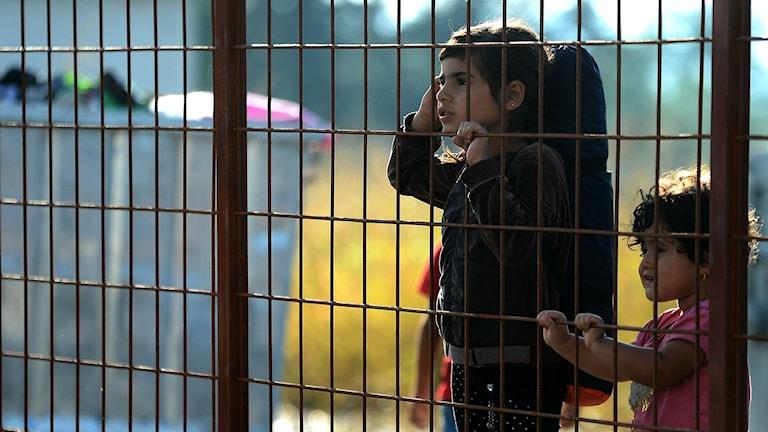 Flyktingbarn i Makedonien. Foto: Borce Popovski/TT