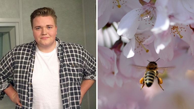 David Lindvall, , pollenallergiker.