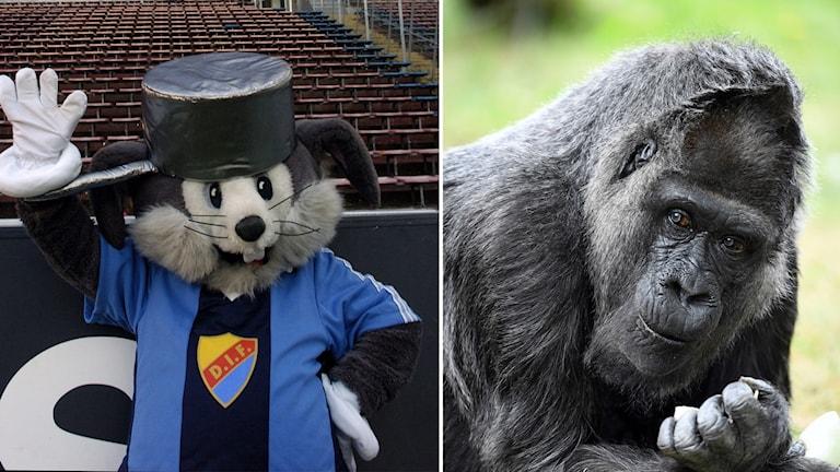 Järnkaninen och en gorilla.