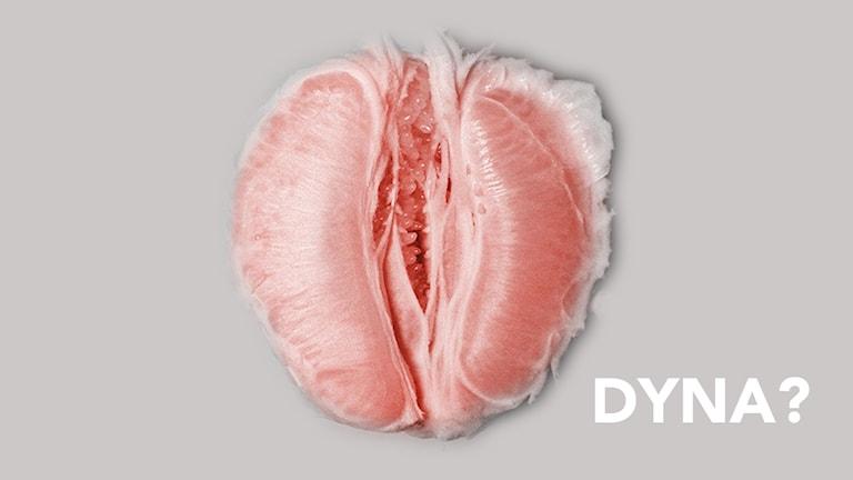 """Nytt ord för kvinnlig erektion, """"dyna""""."""