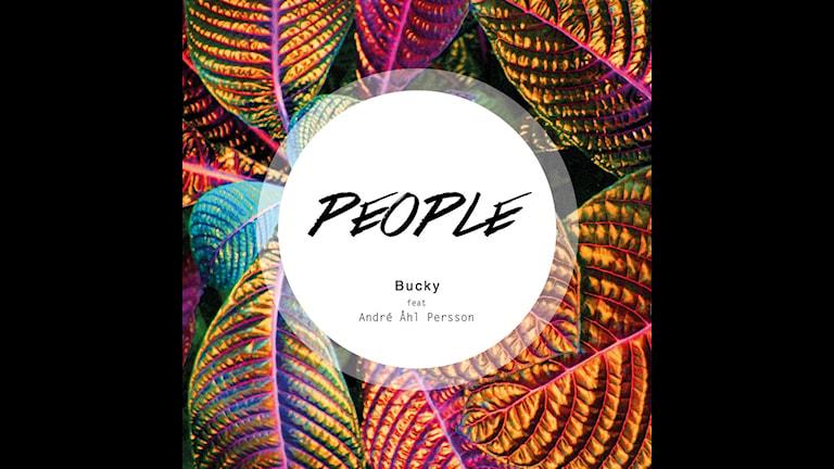 Bucky. Foto/Cover: Hanna skogsberg