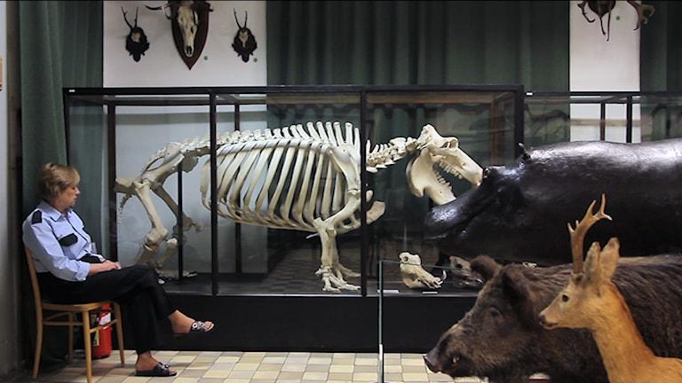 Natural History Museum Foto: Magda_Kulak