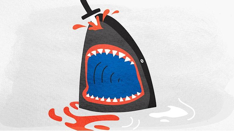 shark_nisse_1920x1080-1920x1080