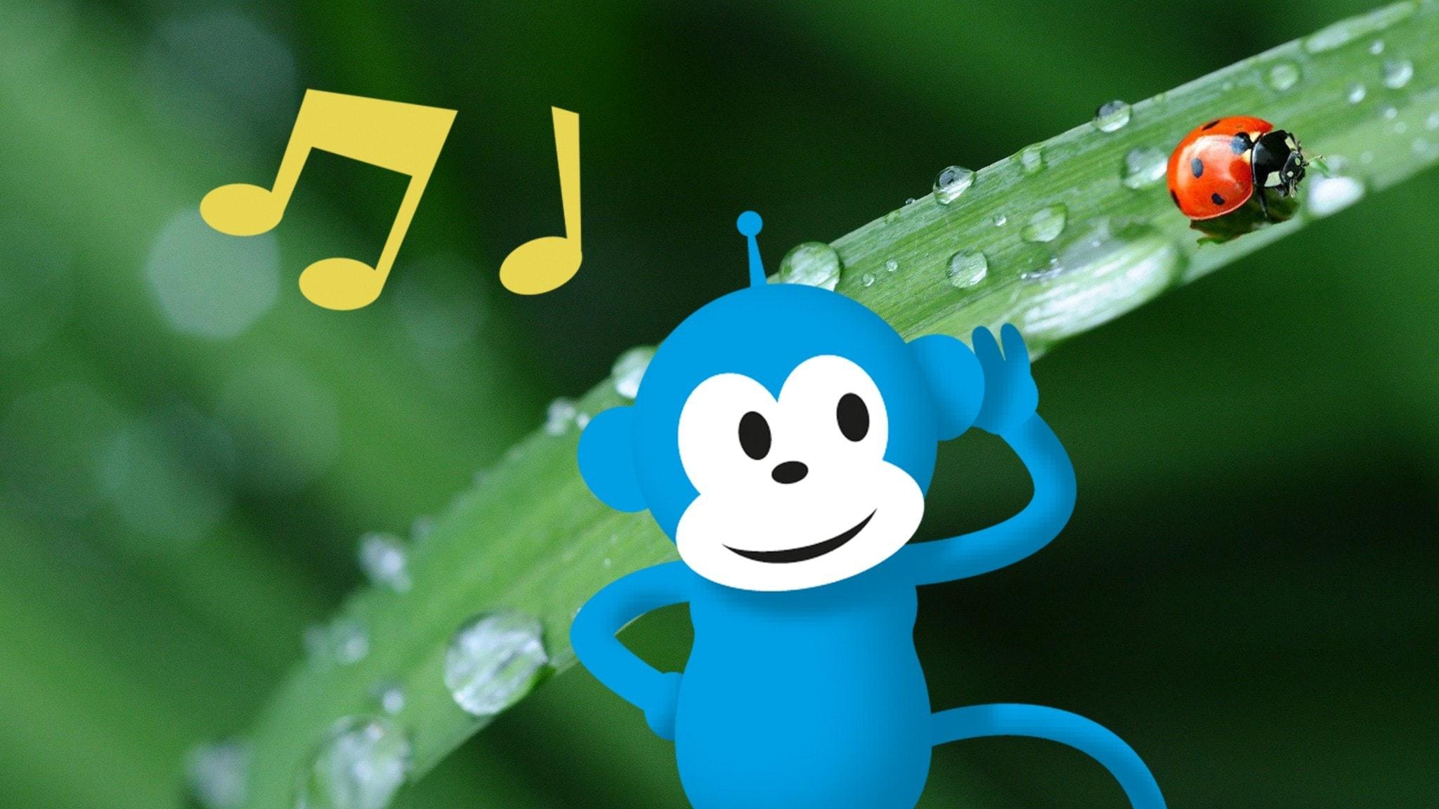Radioapan lyssnar på en nyckelpiga som kryper på ett grässtrå. Foto på nyckelpigan: Från Pixabay