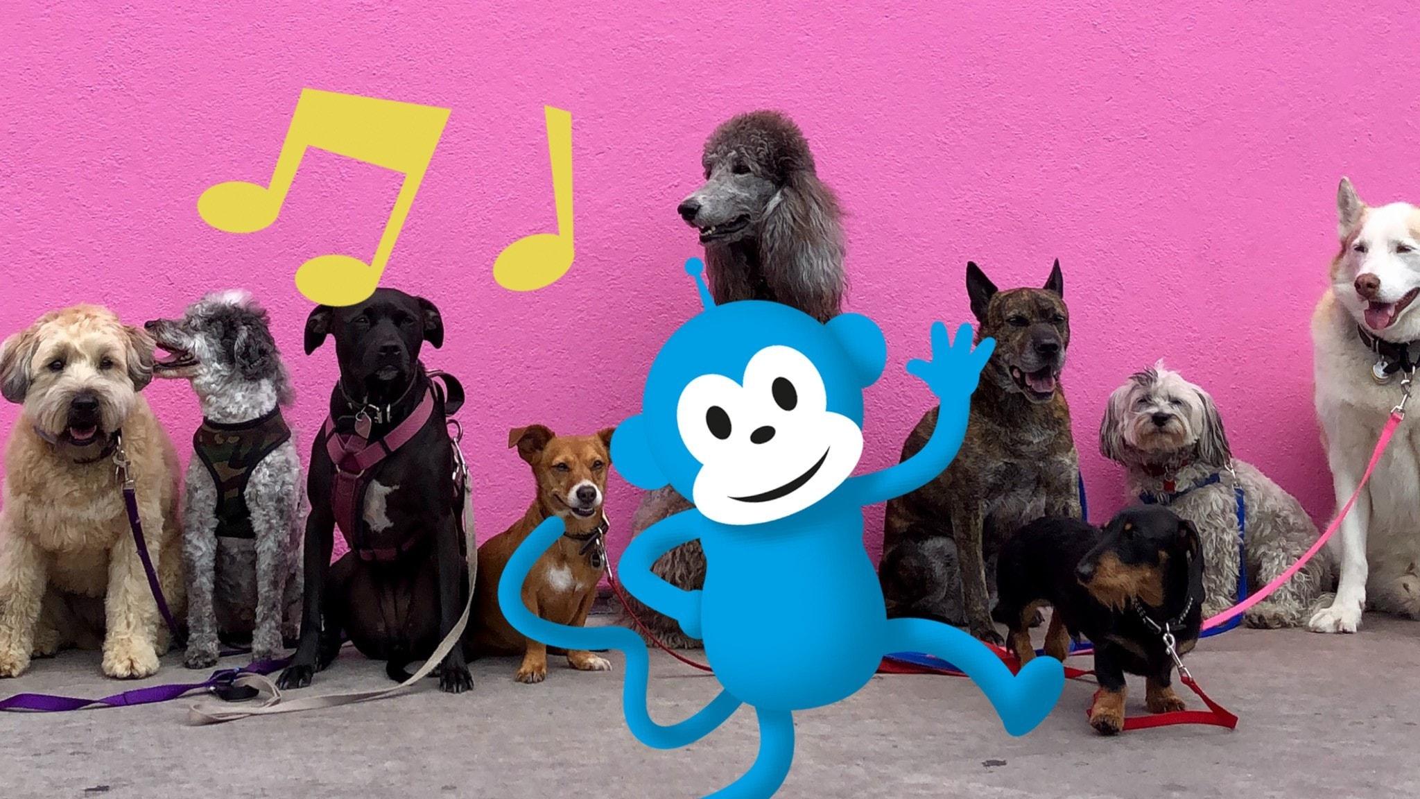 Radioapan med en massa hundar.