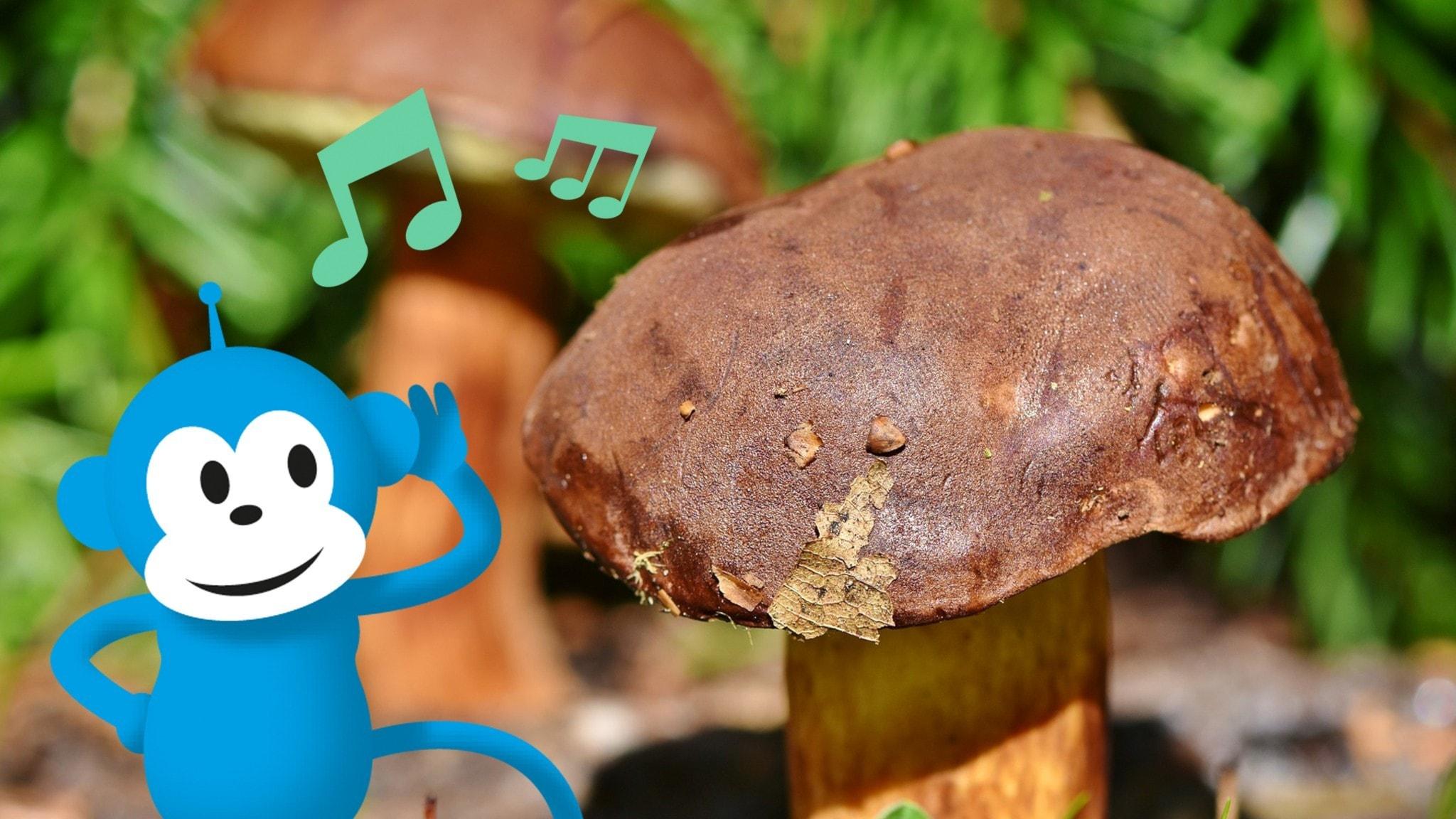 Radioapan lyssnar på en stor svamp.