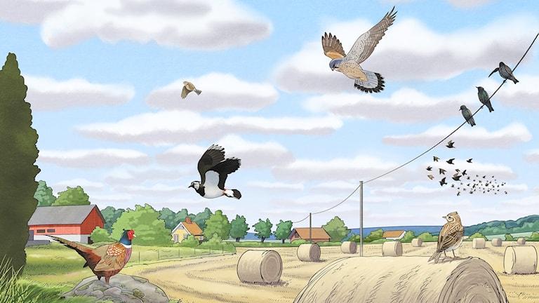 Fågelspaning, del 2 - På landet. Bild: Oskar Jonsson
