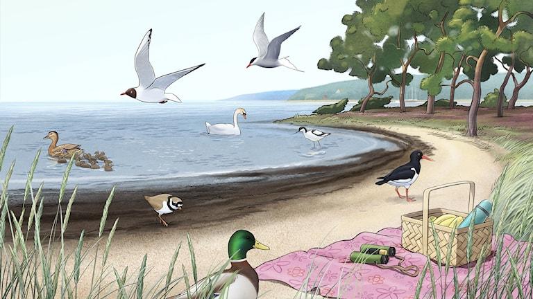 Fågelspaning, del 5 - Vid sjön. Bild: Oskar Jonsson