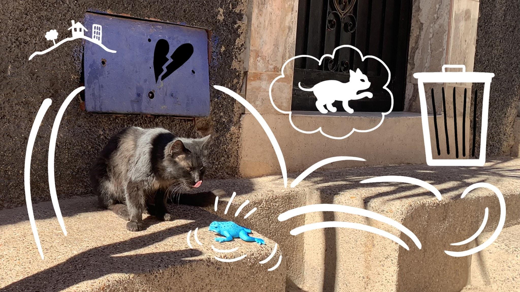 Grodan Kville pratar med en gatkatten på en trottoar i Marocko. Bild: Astrid Molin och Ingrid Flygare.