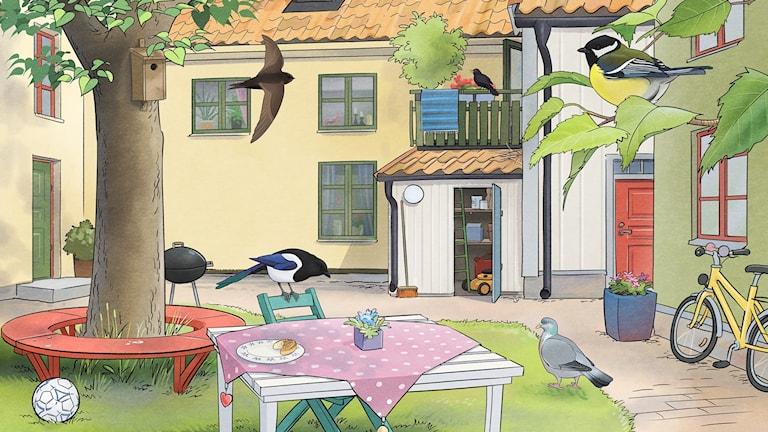 Fågelspaning, del 1 - Runt huset. Bild: Oskar Jonsson