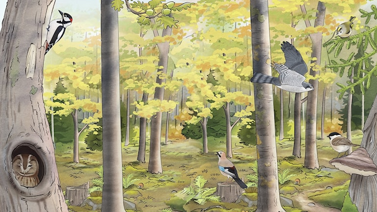 Fågelspaning, del 3 - I skogen. Bild: Oskar Jonsson