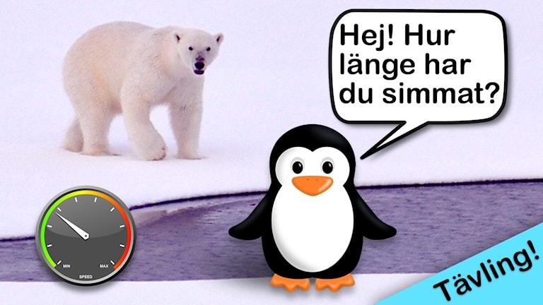 Ett bildkollage av en isbjörn, en hastighetsmätare och en pingvin som säger: hej, hur länge har du simmat?