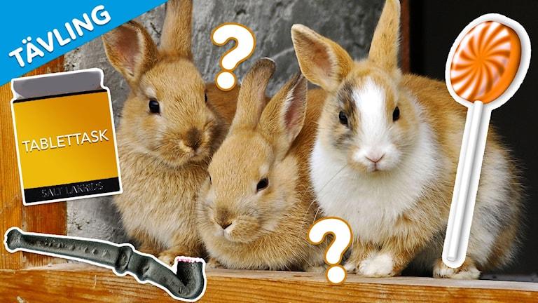 """Montage med tre kaniner, en lakritsklubba, en tablettask och en morotsklubba. I övre vänstra hörnet står det """"Tävling""""."""