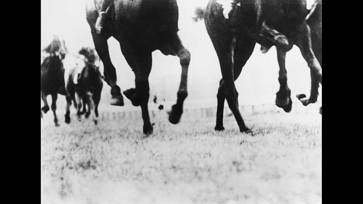 Att kunna studera en galopperande häst var en sensation i den tidiga filmen. Foto: SVT bild.