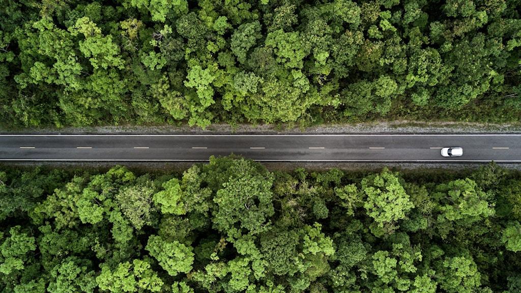 Flygbild på en bil som kör på en väg genom en skog.